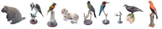 Opgezette-dieren
