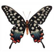 Papilio-antenor