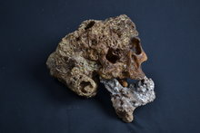 Replica-schedel-Elephant-man-Joseph-Merrick